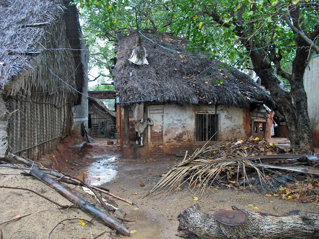 thatched hut in India with goat