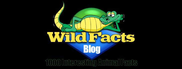 Wild Facts
