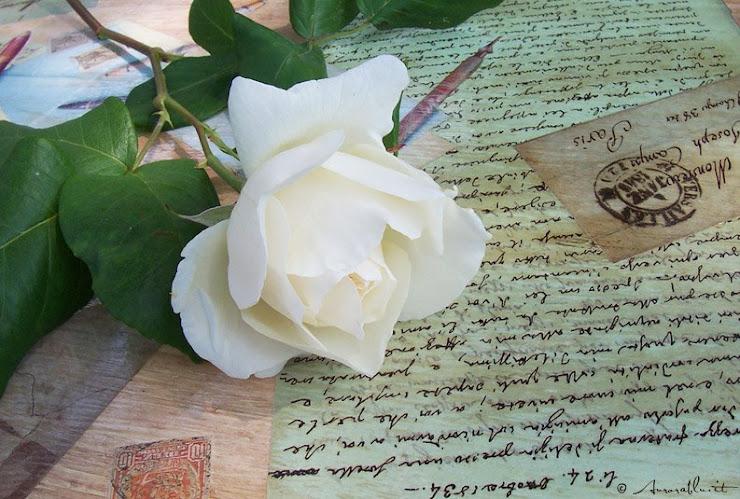 http://2.bp.blogspot.com/_5y8KA8kME4g/SLxntyuskwI/AAAAAAAAABs/YeblLXQMQKo/S740/rosa_bianca.jpg