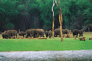 Elephants at Kerala