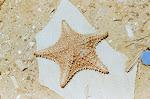 al mar le falta una estrella