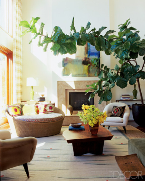 Jenny castle design plant life fiddle leaf fig tree - Best indoor plants for living room ...