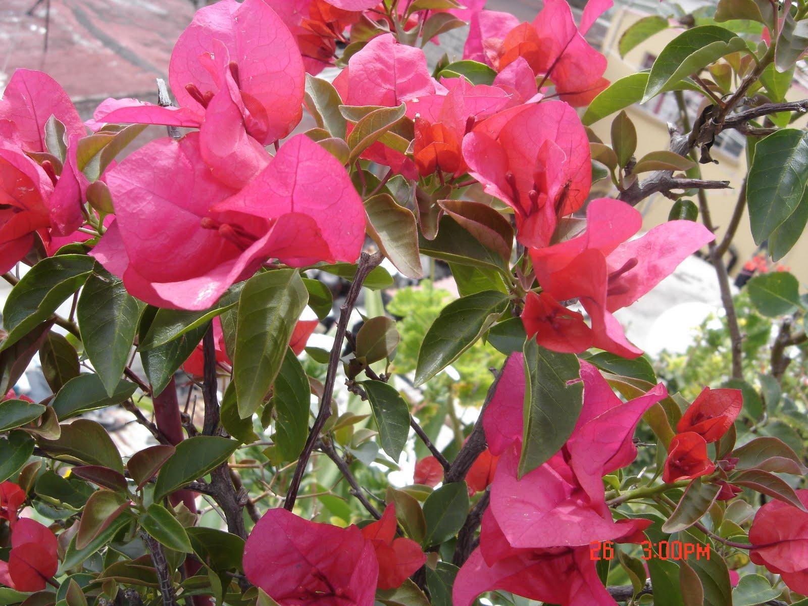 Plantas De Jardin Nombres Dise os Arquitect nicos Mimasku