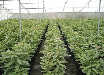 Viveros y mas agosto 2010 for Distribuidores de plantas para viveros