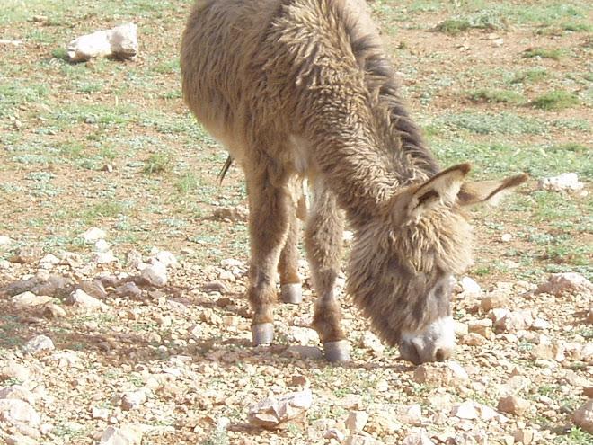 A Berber 4x4