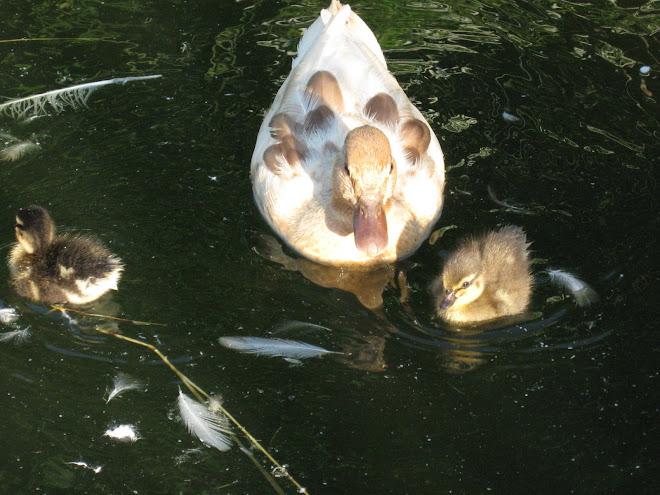 Quack, Quack, Quack.