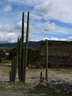 Paysages du Mexique - Mitla cactus - photo blog voyage