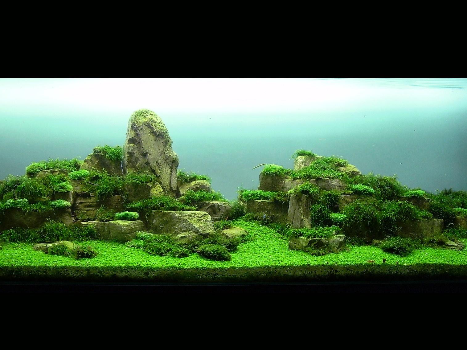 Pin Aquascaping Tag Aquascape Go Green Adalah Seni on Pinterest