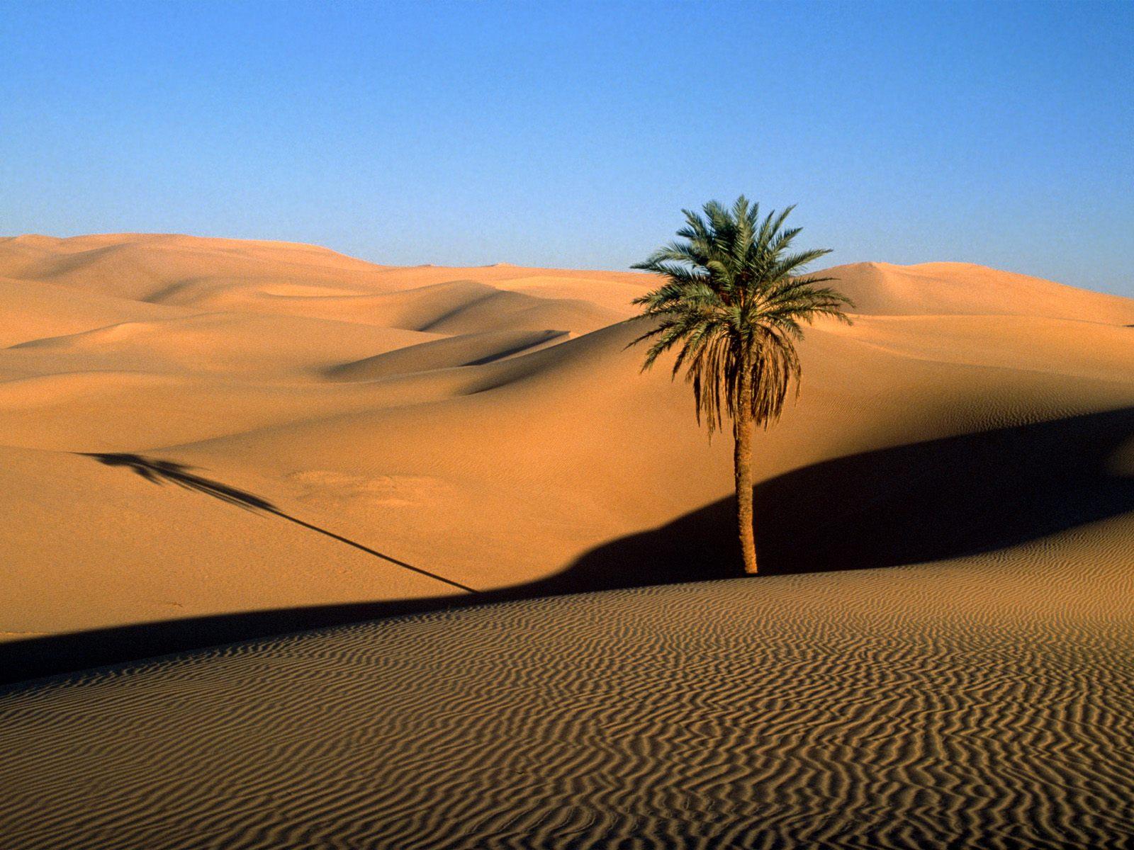 GURUN SAHARA,desert,oase