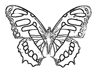 Three beautiful butterflies coloring pages butterfly for Beautiful butterfly coloring pages