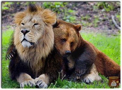 lion vs bear