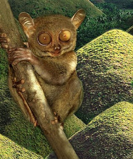 Chocolate Hills and Tarsier