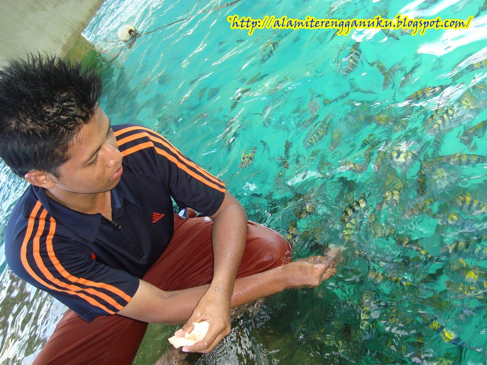gambar bagi ikan makan di pulau redang