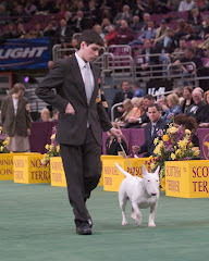 Terrier Group Westminster KC 2006