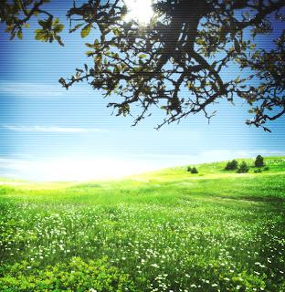 ابحث عن قلب يمنحك الضوء التفاؤل Natureur0