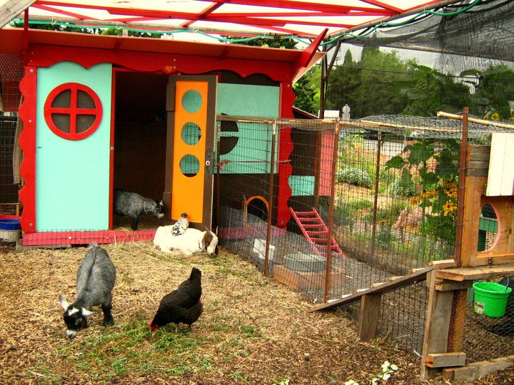 how to build a pygmy goat house