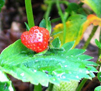 Heart-shaped strawberry on leaf