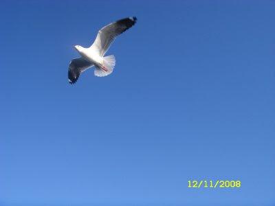 Zin Yaw Bird