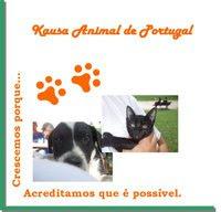 Associação Kausa Animal de Portugal