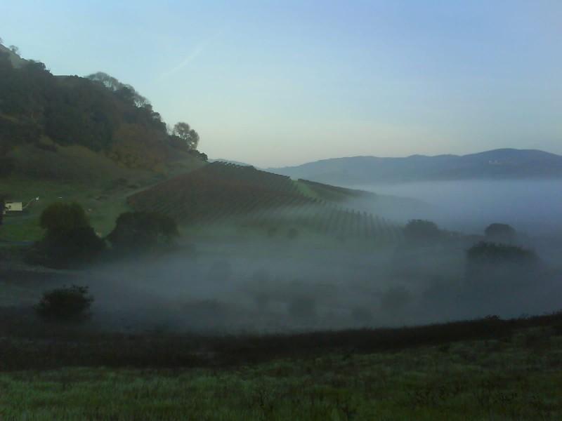 [carneros+fog]