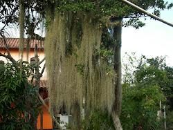 Gosto dessa árvore