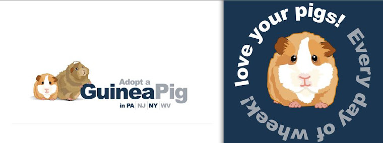 Adopt a Guinea Pig in PA/NJ/NY/WV
