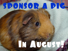 CLICK TO HELP SENIOR AND SPECIAL NEEDS PIGS!