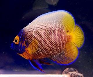 Todo sobre acuarios peces de agua salada for Agua para peces
