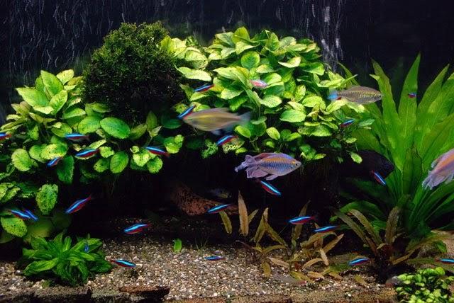 Todo sobre acuarios plantas naturales para acuarios agua for Todo para acuarios