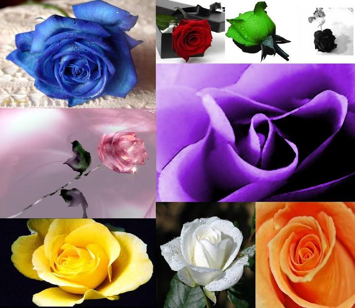 Blue_Rosas.