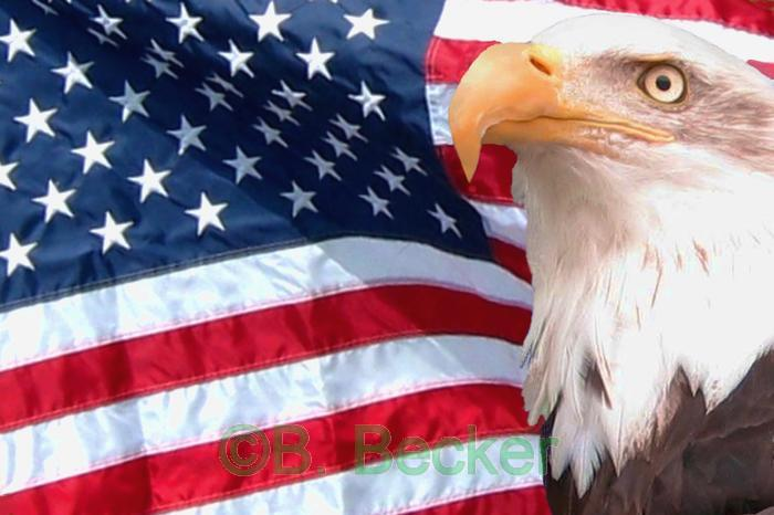 american flag background with eagle. american flag eagle wallpaper.