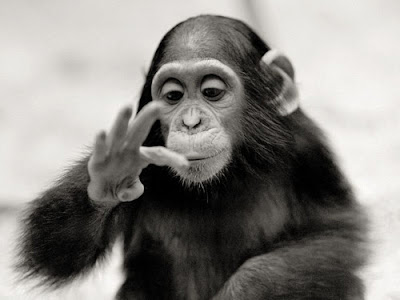Monkey 2011