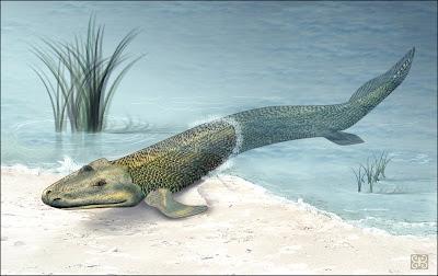 Evolucion Celacanto