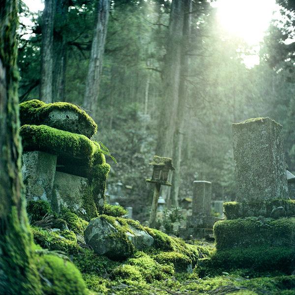[Landscape_1_Moss+Forest.jpg]