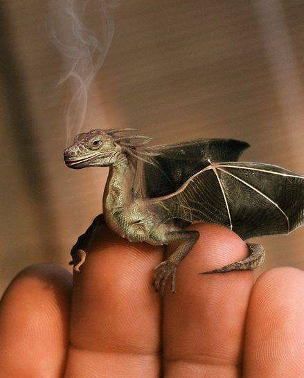 [Mythical+Creatures_dragon2.jpg]