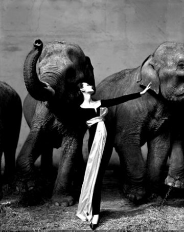 [Elephants_richard_avedon_dovima_1955.jpg]