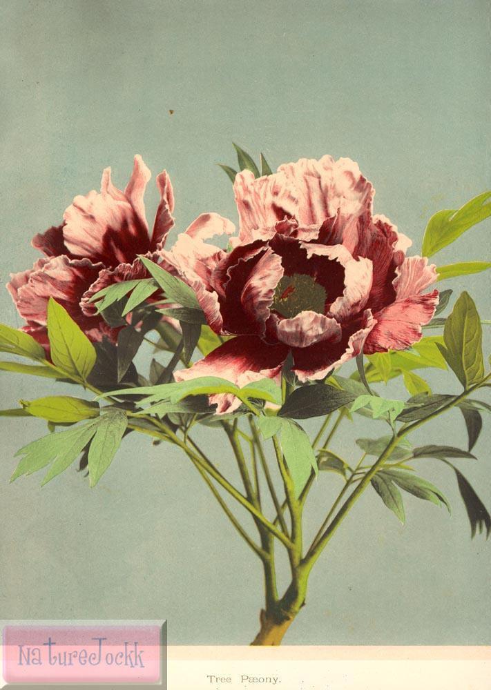 [flowers_1.jpg]