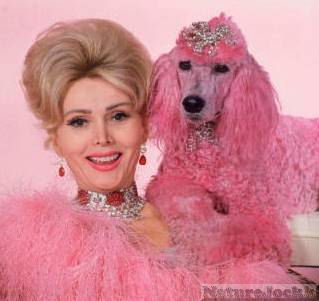 [Pink_4_lady+and+pink+poodle.jpg]