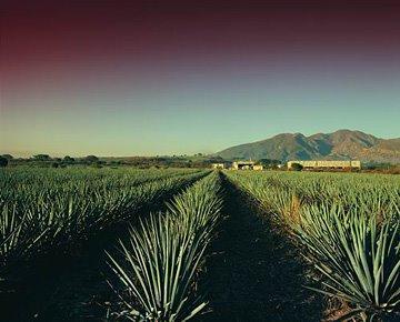 [casa+noble+tequila+company]