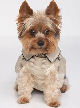 ropa y accesorios para perros Juicy Couture