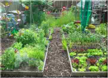 Vegetable Garden: Friday