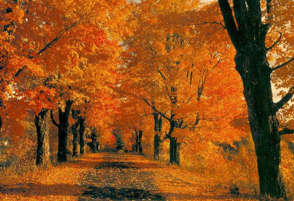 Musicartetv leggi argomento video e immagini d 39 autunno for Immagini autunno hd