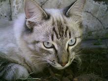 A vida secreta dos gatos: