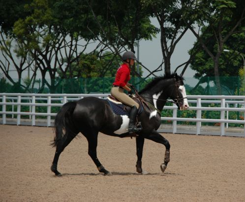 singapore turf club riding