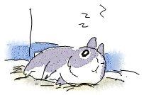 [LazyBunny1]