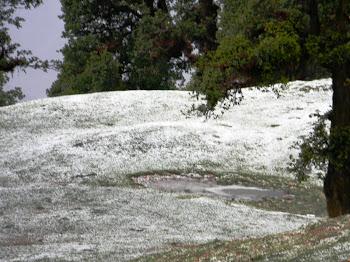 घास पर जमी बर्फ