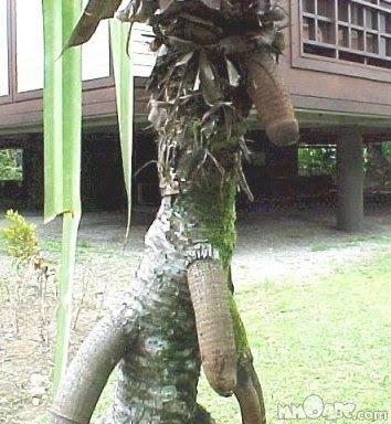 نباتات ولاتفهمونا Nasty+Nature+(36).jp