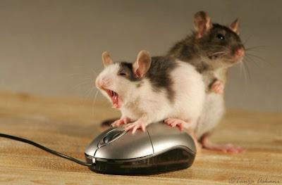 tikus ML