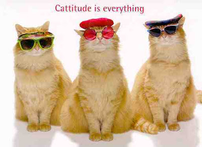 [Image: cattitude_is_everything.jpg]