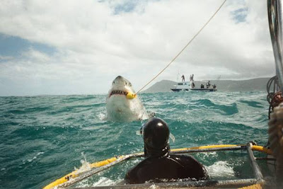 Largest Shark Ever Seen http://www.the-en.com/t937-world-s-biggest-shark-ever